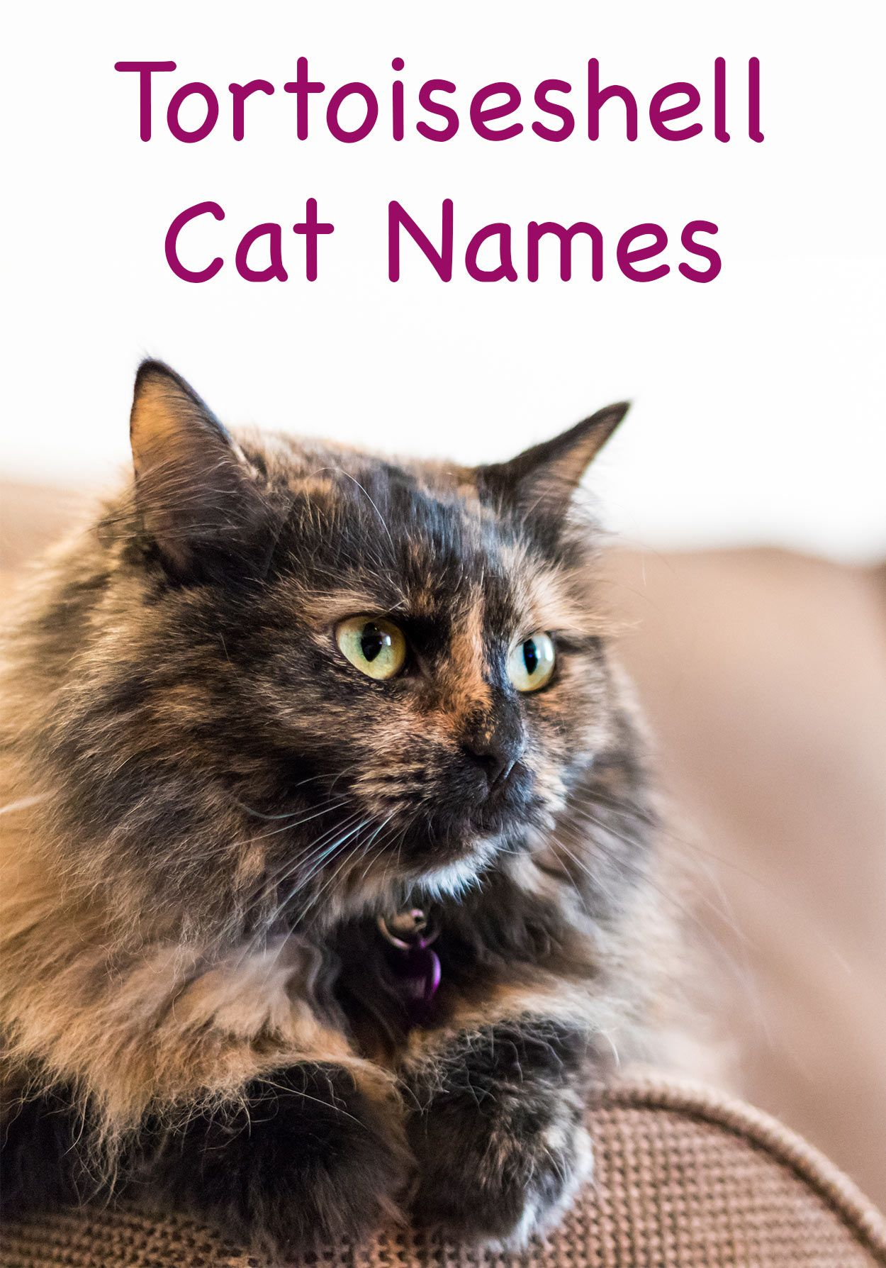 Cool, Unique, and Creative Names for Your Black Cat Cute