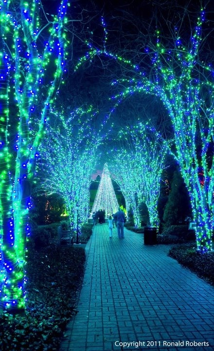 Holiday light show at the Botanical Garden is a great way