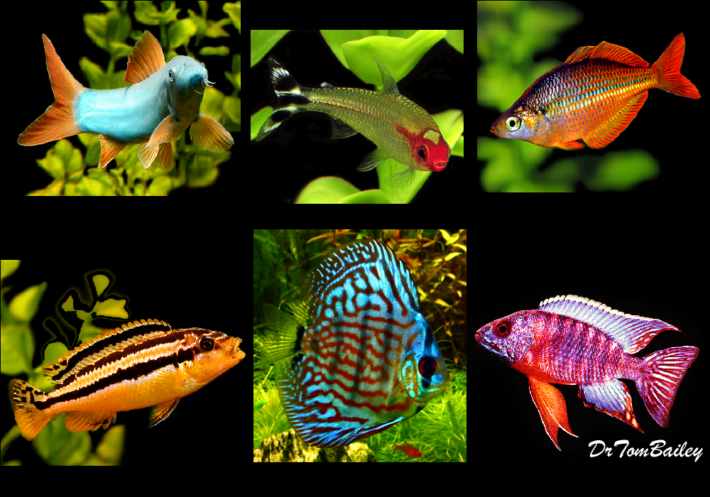 This Category Lists The Fish That Have Recently Arrive Here From Collectors And Fish Farms All Over The World Cl Aquarium Fish For Sale Fish For Sale Pet Fish