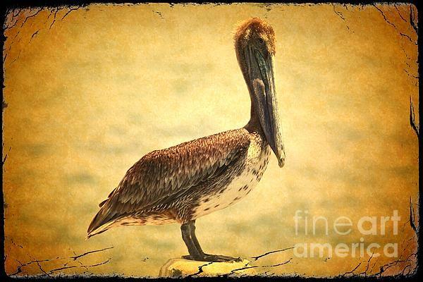 """Charming Brown Pelican with Old World Framing"" by Carol Groenen #birdart #pelican #pelicanart #pelicans #brownpelicans #beachtheme #beachdecor"
