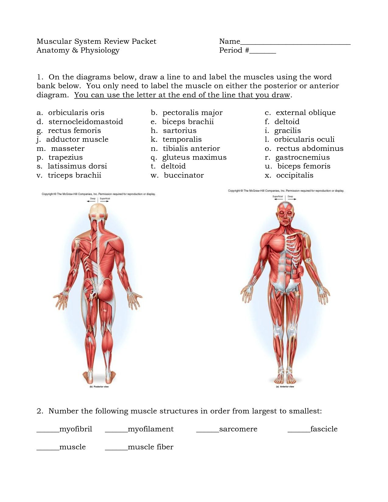 Muscle Diagram Blank   Muscle Diagram Blank 40 Elegant