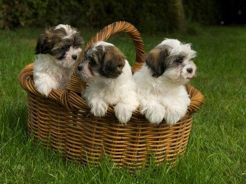 jw_sig_navtip boomer pups | special animals | cute animals, dogs