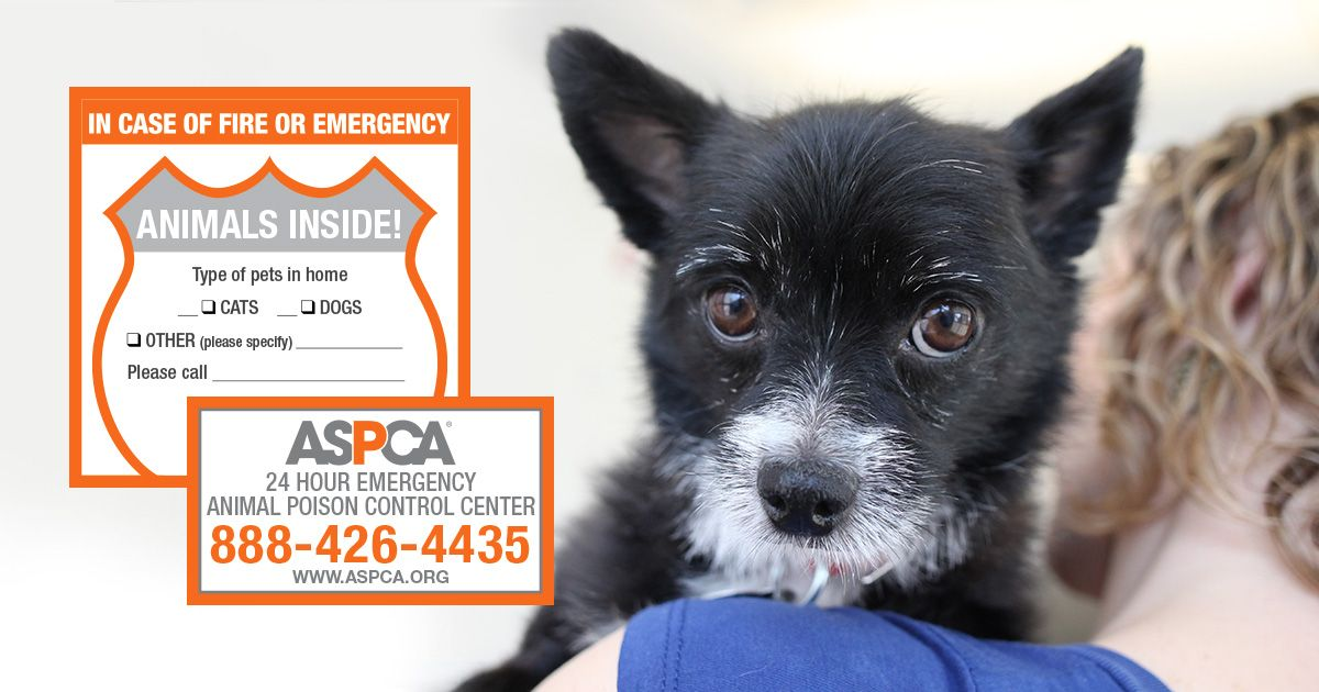 Keep Pets Safe With Your Free Aspca Pet Safety Pack Pet Safety Pet Emergency Pet Safe