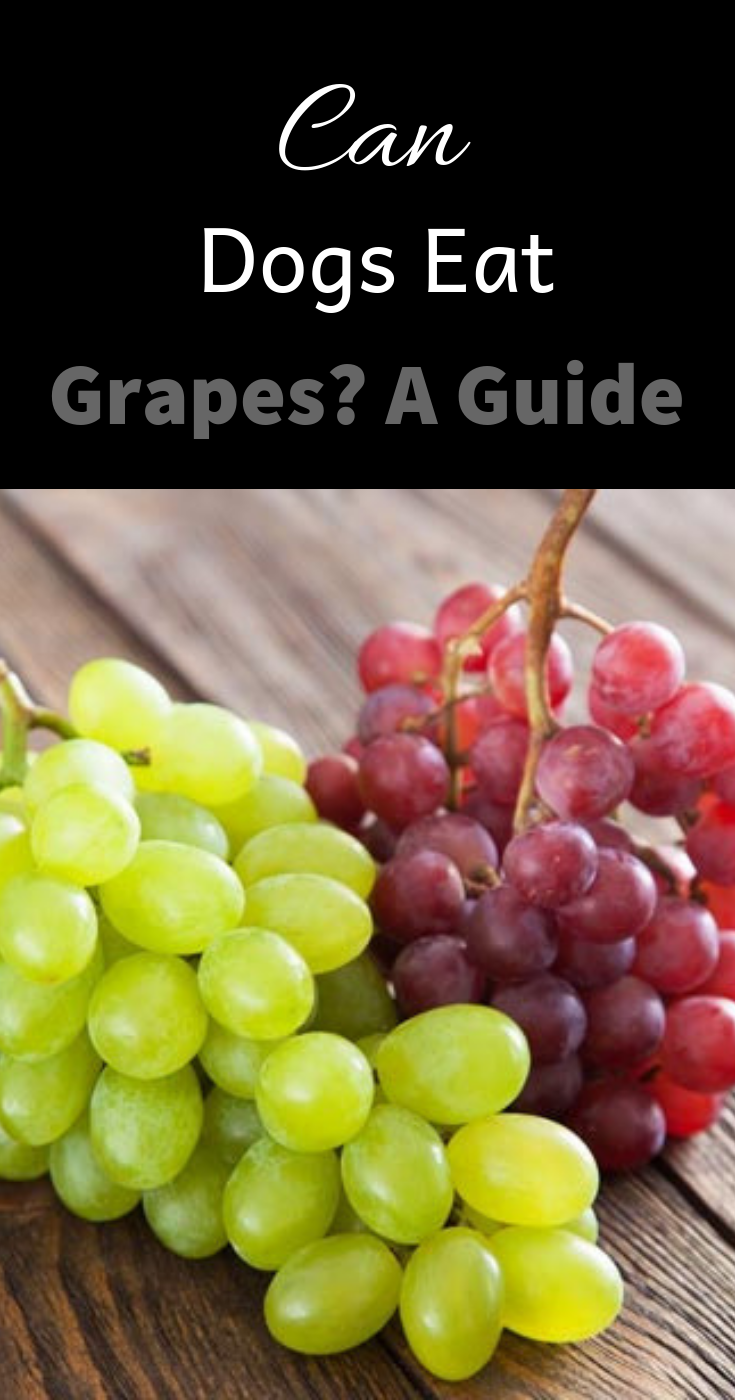 33++ Why are dogs allergic to grapes information