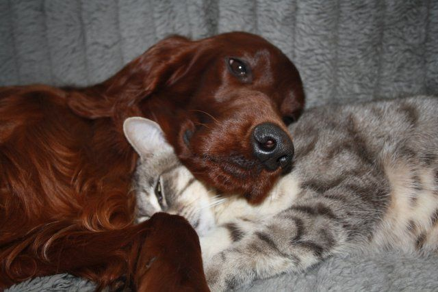 vrienden voor het leven