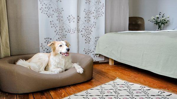 Schöne Hundebetten schöne manufaktur für hundebetten und hundekissen