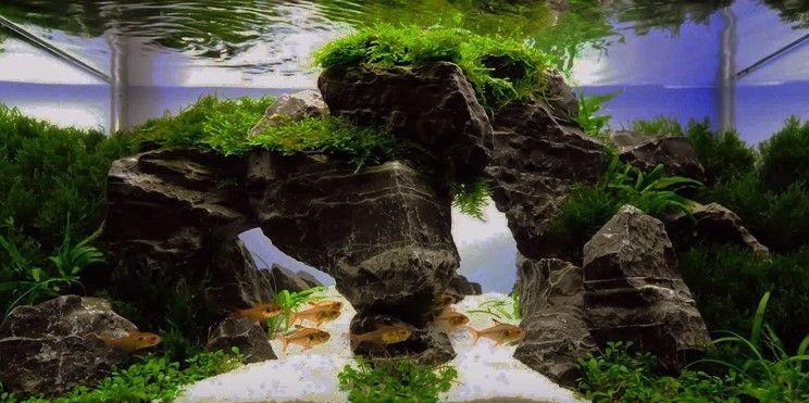 Aquascape Design beautiful aquascape | aquascaping | pinterest | aquascaping