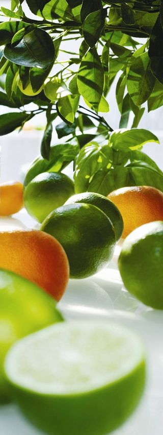 """""""Lime, Basil & Mandarin"""" This premium fragrance combines fresh zesty citrus notes of Lime and Mandarin, with undertones of Basil and Herbs. A unisex fragrance suitable for all."""