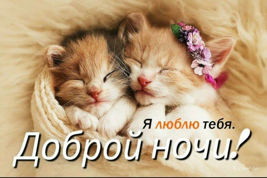 Картинки спокойной ночи милый котик