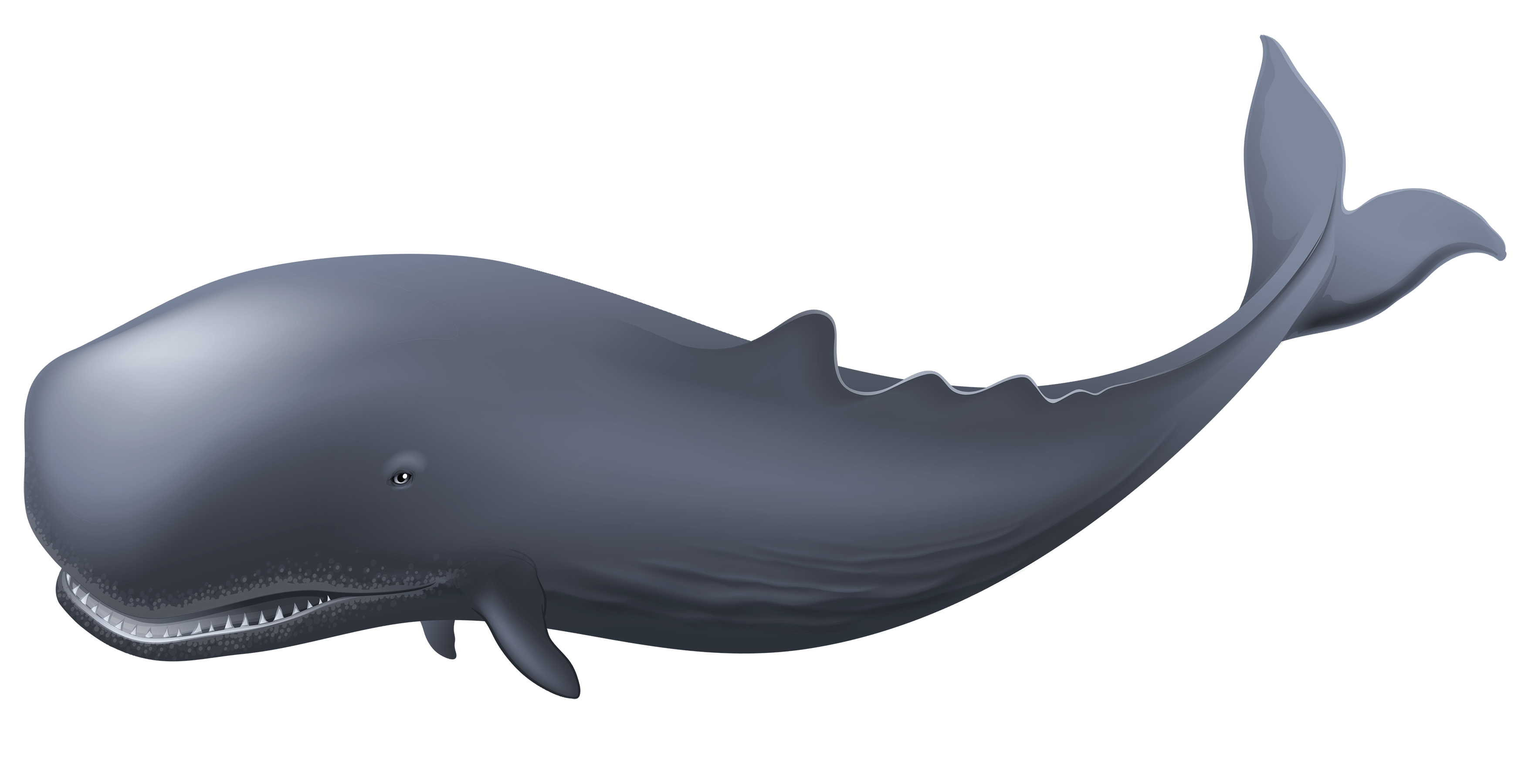 Whale Clipart Whale, Background images, Transparent