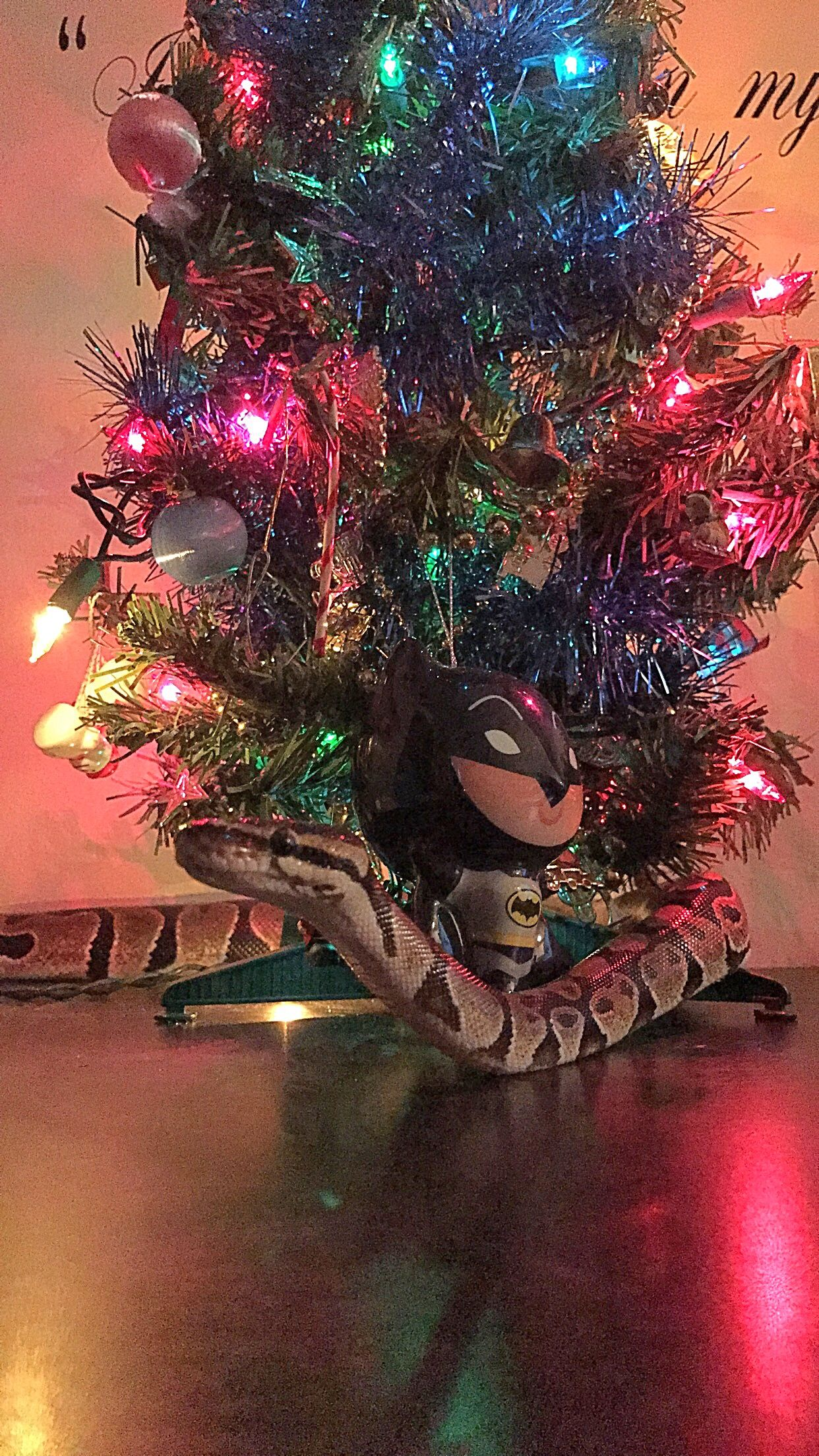 Pin by Elizabeth Breslin on Ball Python Christmas | Pinterest | Ball ...