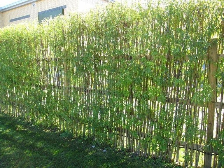 8 Living Fence Ideas To Beautify Your Outdoor Space Matchness Com Natural Fence Willow Fence Living Willow Fence