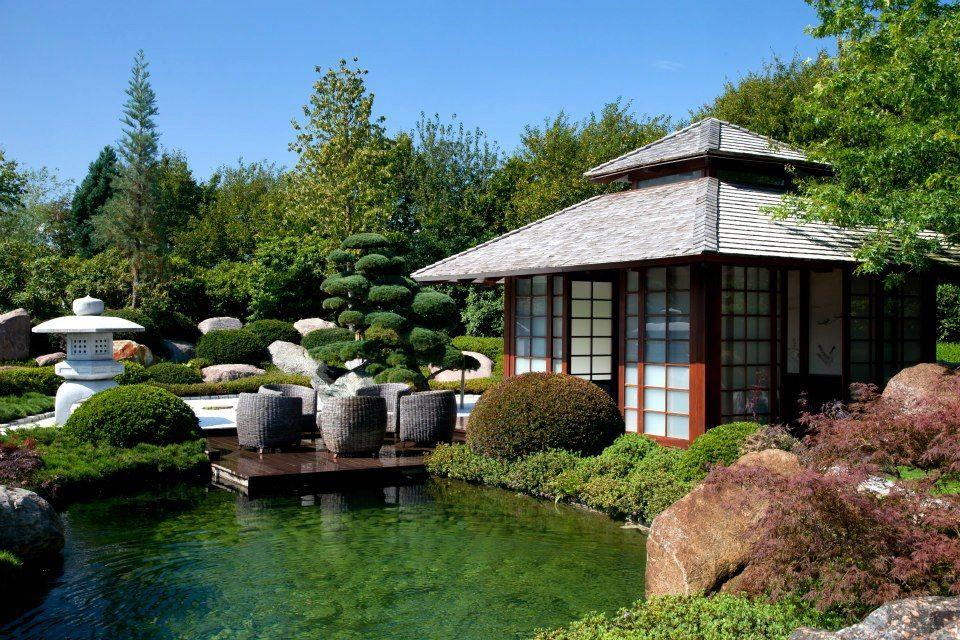 #Koiteich #JapanischerGarten #Garten #Koi