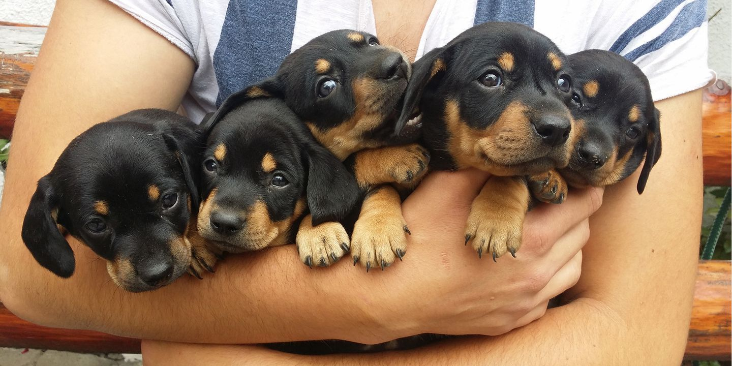 This Pupternship Will Pay You 100 Per Hour To Pet Puppies