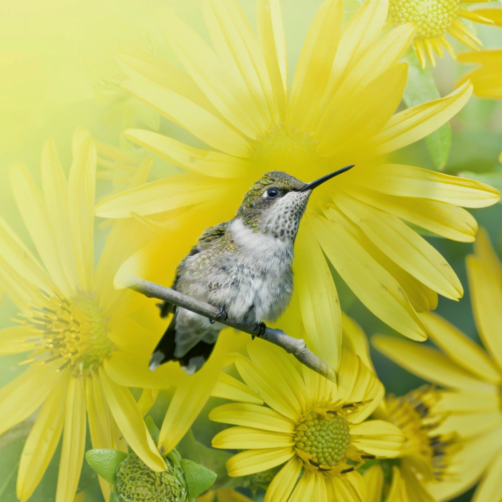 Pin By Loretta Burke On Birds Pinterest Bird