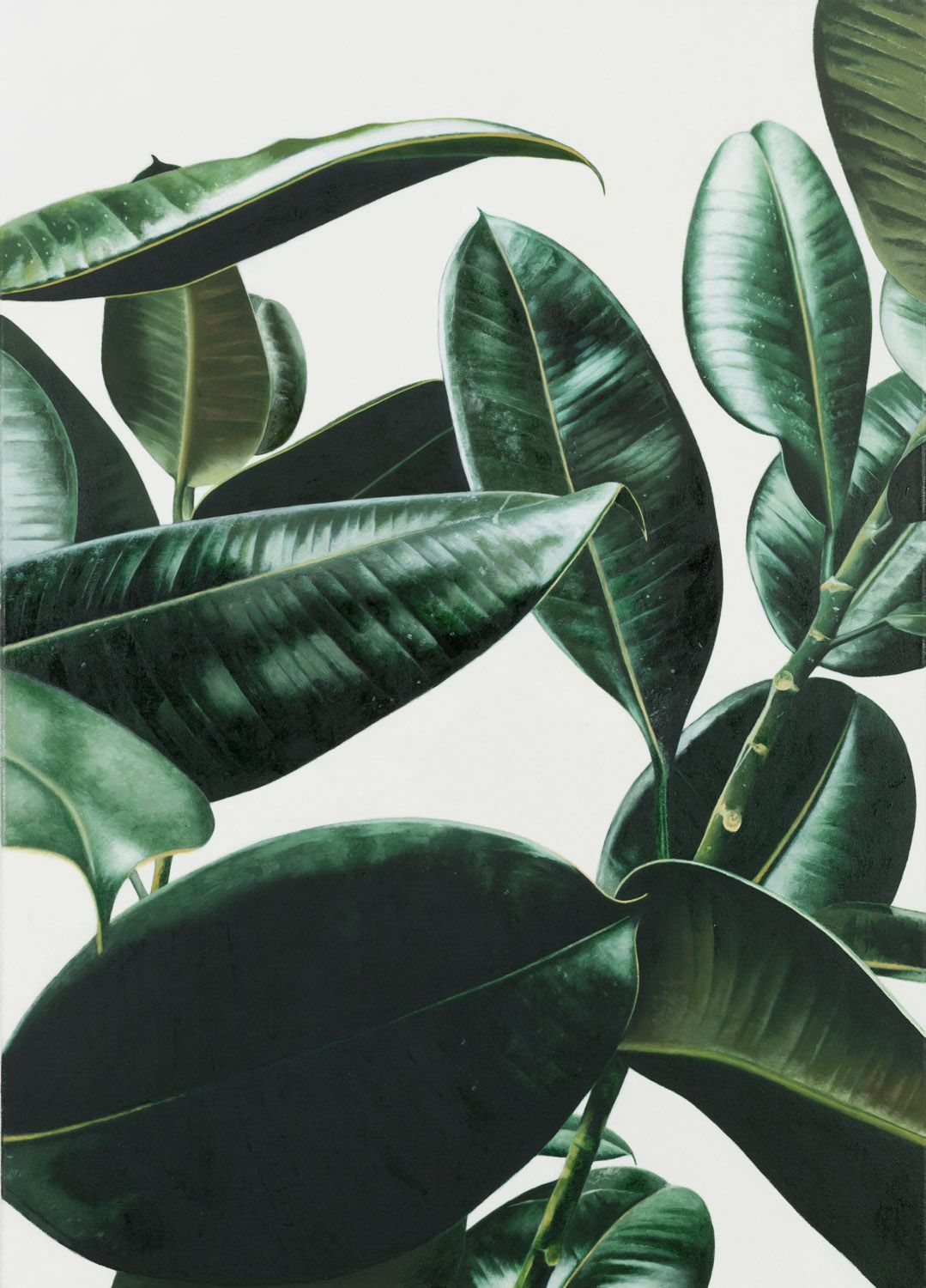 explore rubber plant palm print and more