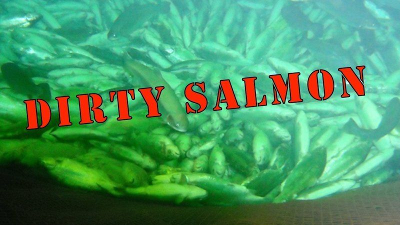 Petition · To the citizens of Norway: Divest from Dirty Salmon · Change.org