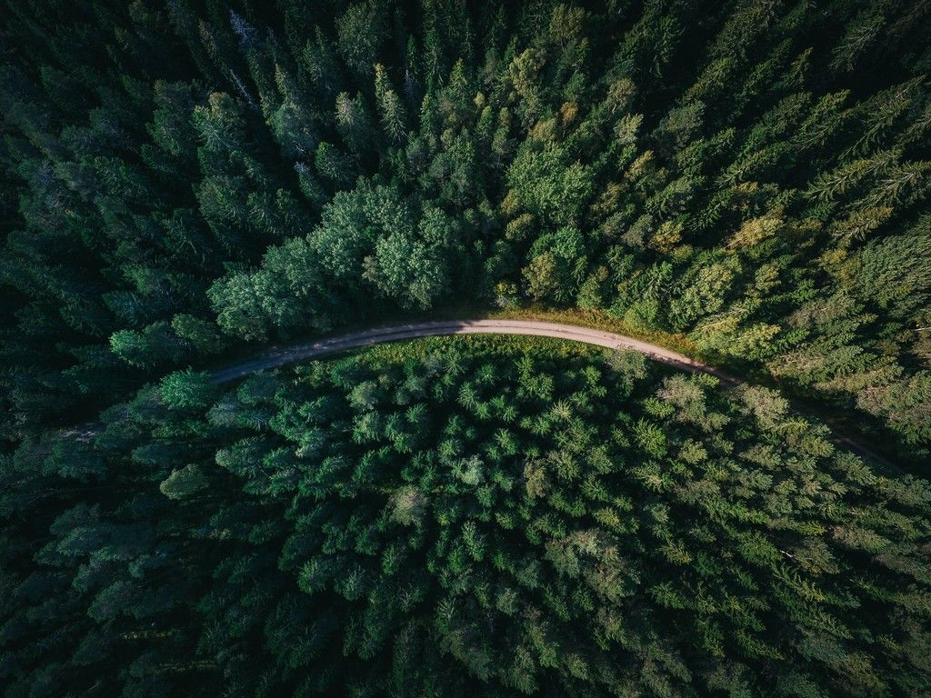 Road Through Trees Wallpaper Aerial View Drone Photos Tree Wallpaper