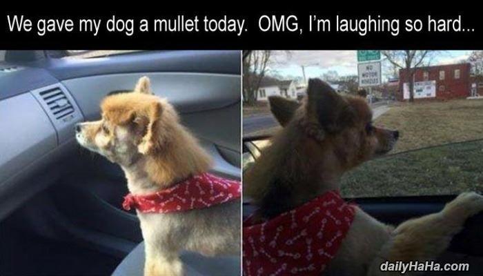 Gave The Dog A Mullet Http Cringeynews Com Funny Gave The Dog A Mullet Funny Animal Pictures Funny Animals Animal Pictures