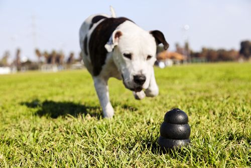 The Top 10 Toughest Dog Toys In The World Tough Dog Toys Smart