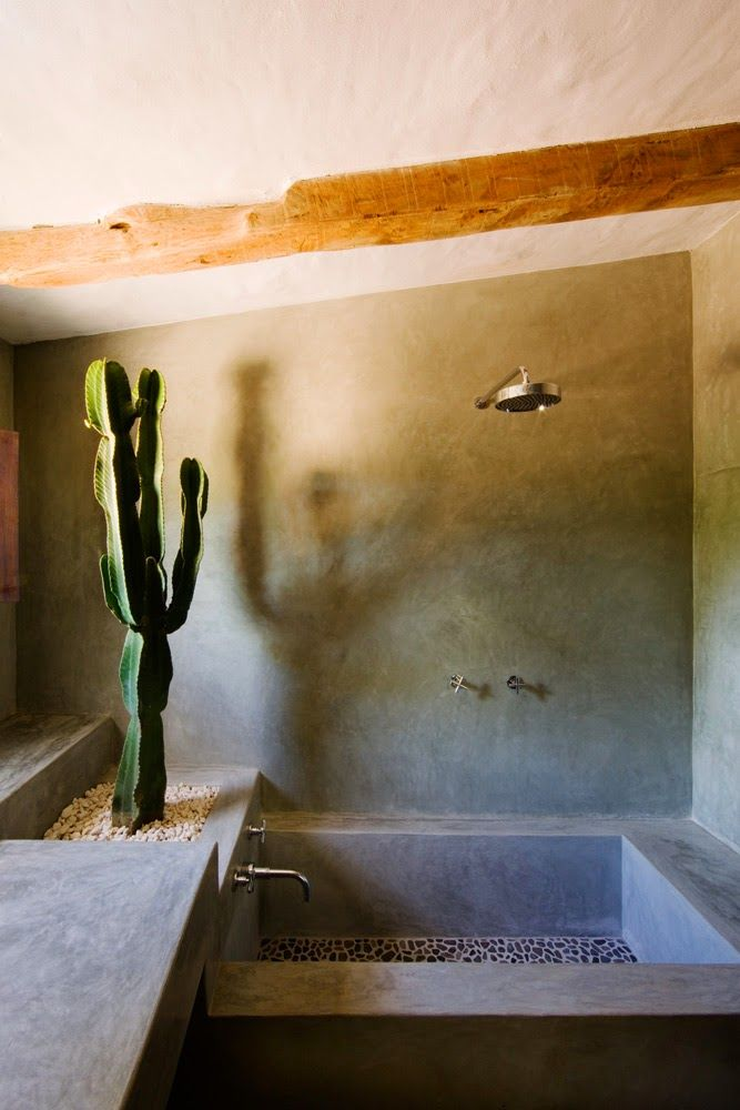 No Cactus This Is Different Design For A Bathroom What Do