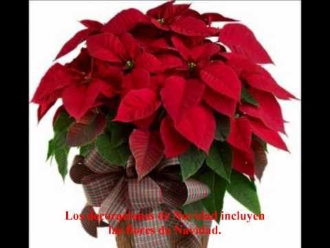 La Navidad En Mexico Youtube Flor De Nochebuena Flor De Pascua Nochebuena Navidad