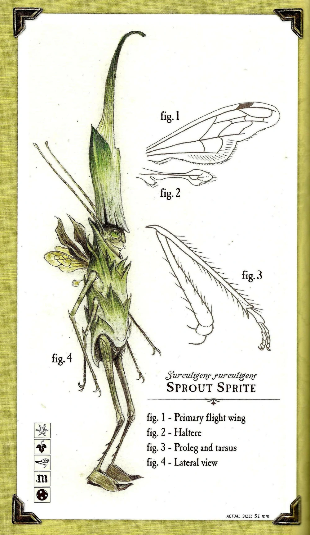 Care and Feeding of Sprites in 2020 Spiderwick