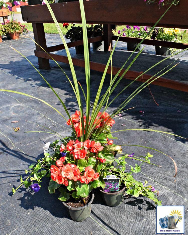 DIY Shade Container Garden   Container gardening, Garden ...