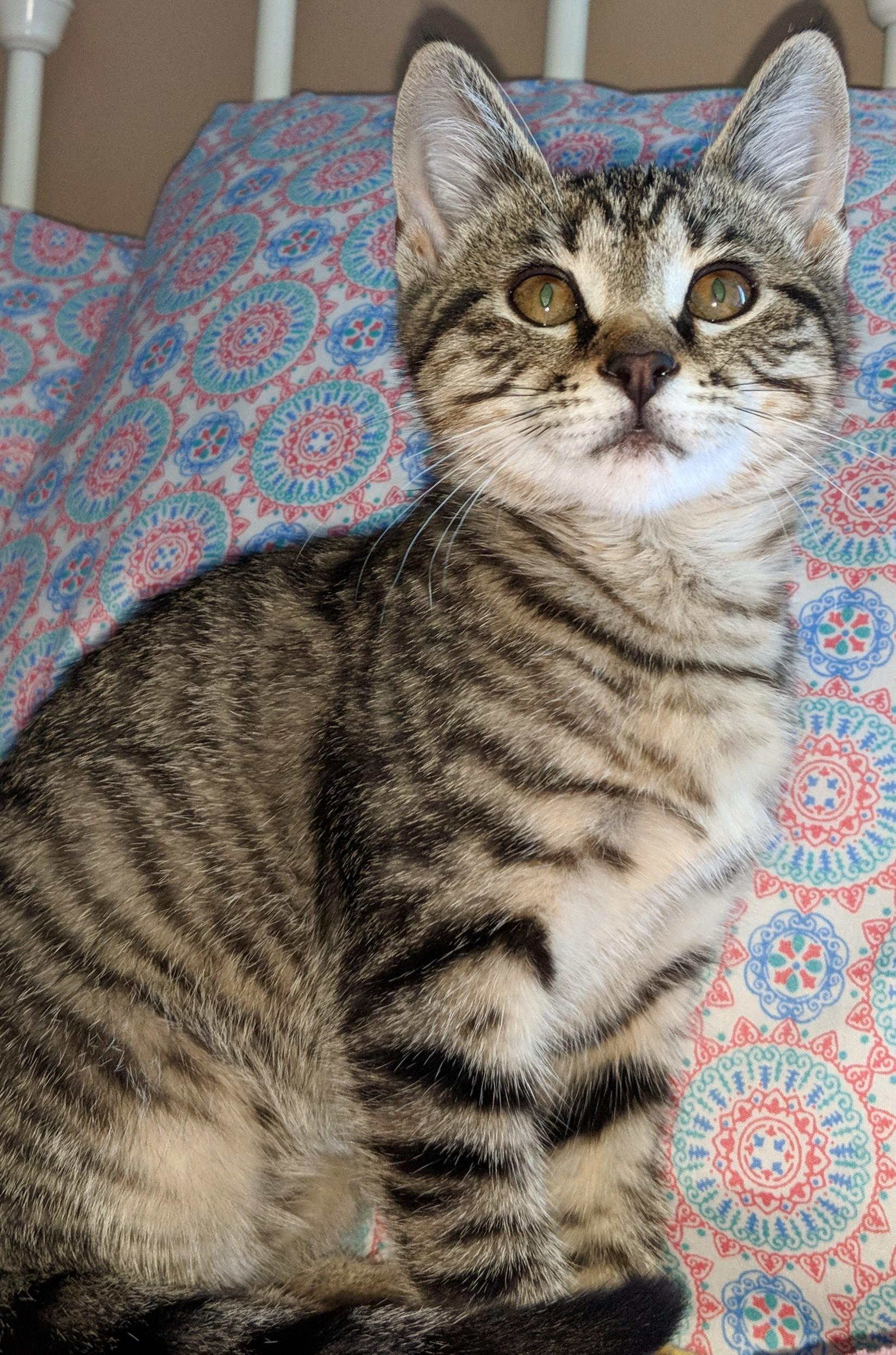 Kitten In 2020 Cats Cat Pics Cute Cats