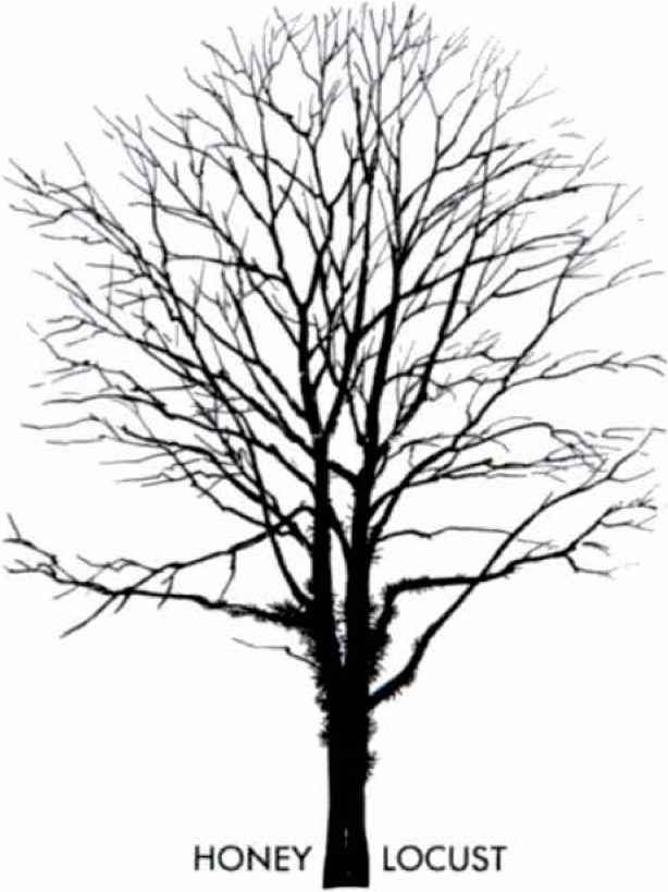 Tree Without Leaves | Drawing Trees | Pinterest | Leaves ...