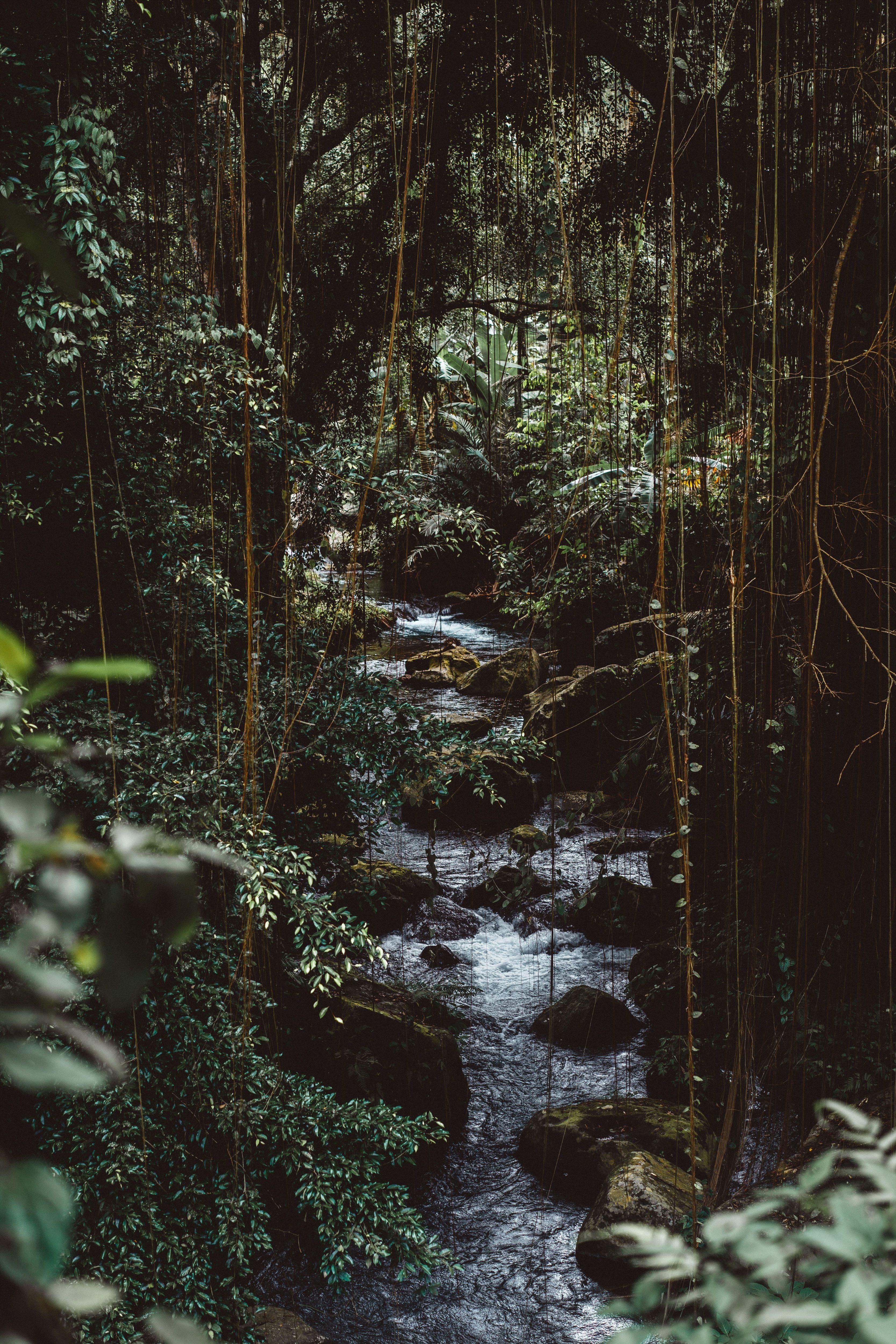 Tranquility Rainforest Meditation Jungle Pictures Nature Iphone Wallpaper Jungle Wallpaper