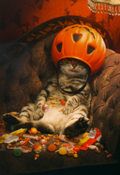 Cute Halloween cat Crazy cats, Halloween cat, Cute animals