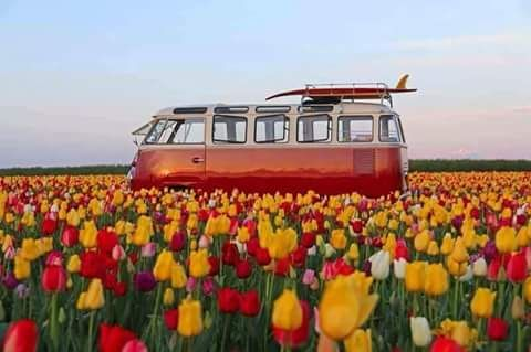 Tulpenveld #VW