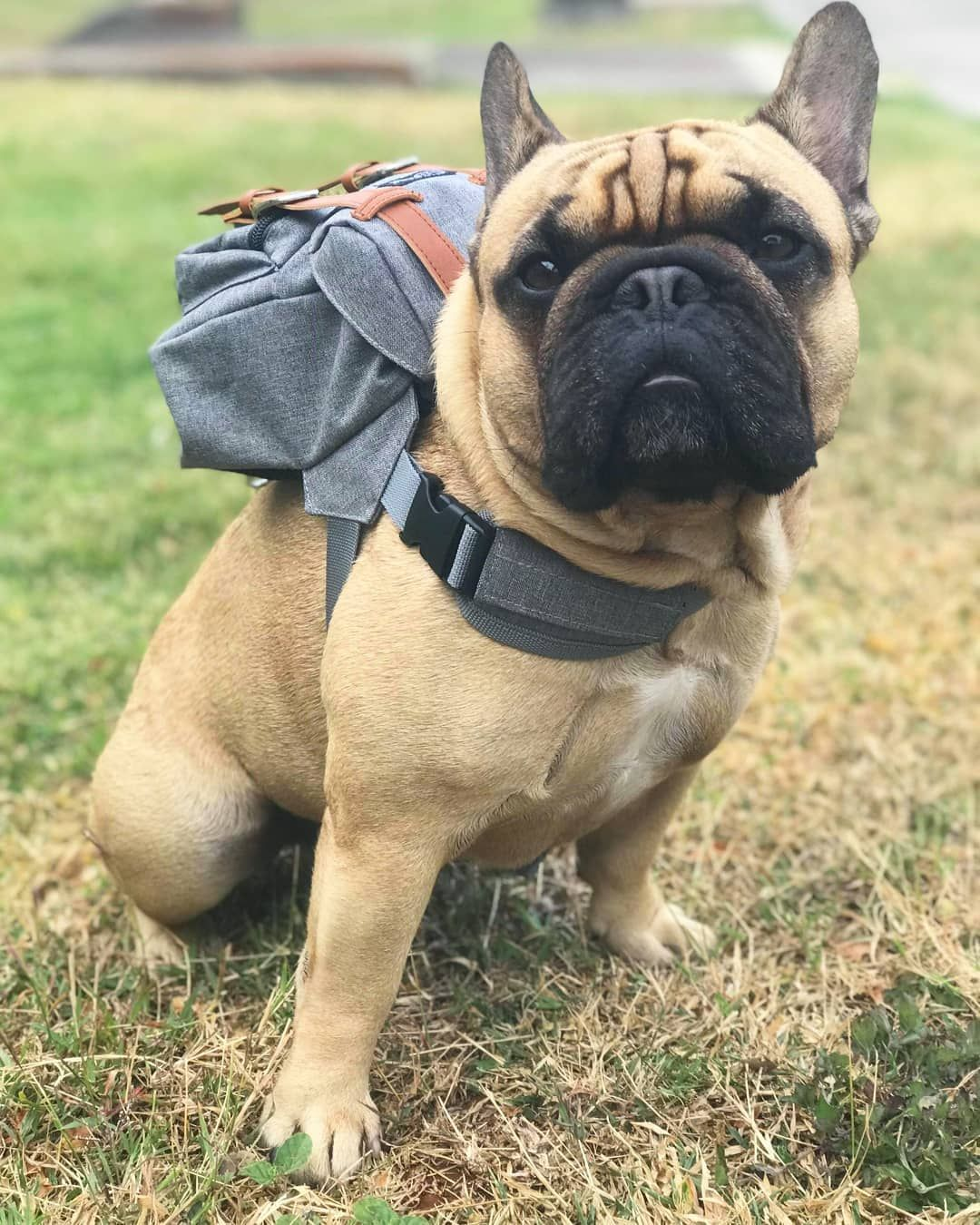 Dapper Series Grey Dog Backpack With Harness Dog Backpack Diy