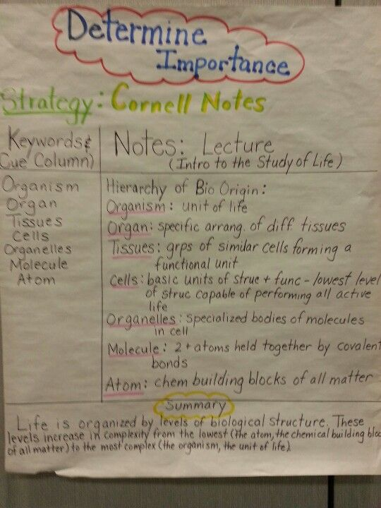 Determine Importance Using Cornell Notes  Anchor Charts