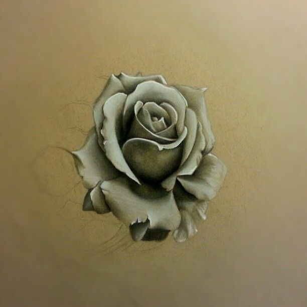 Rose sketch art pencil drawing white