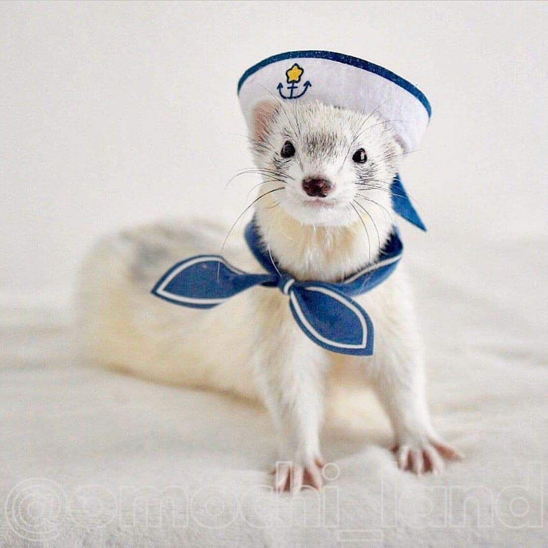 14 of the Best Ferret Costumes We've Seen so Far -