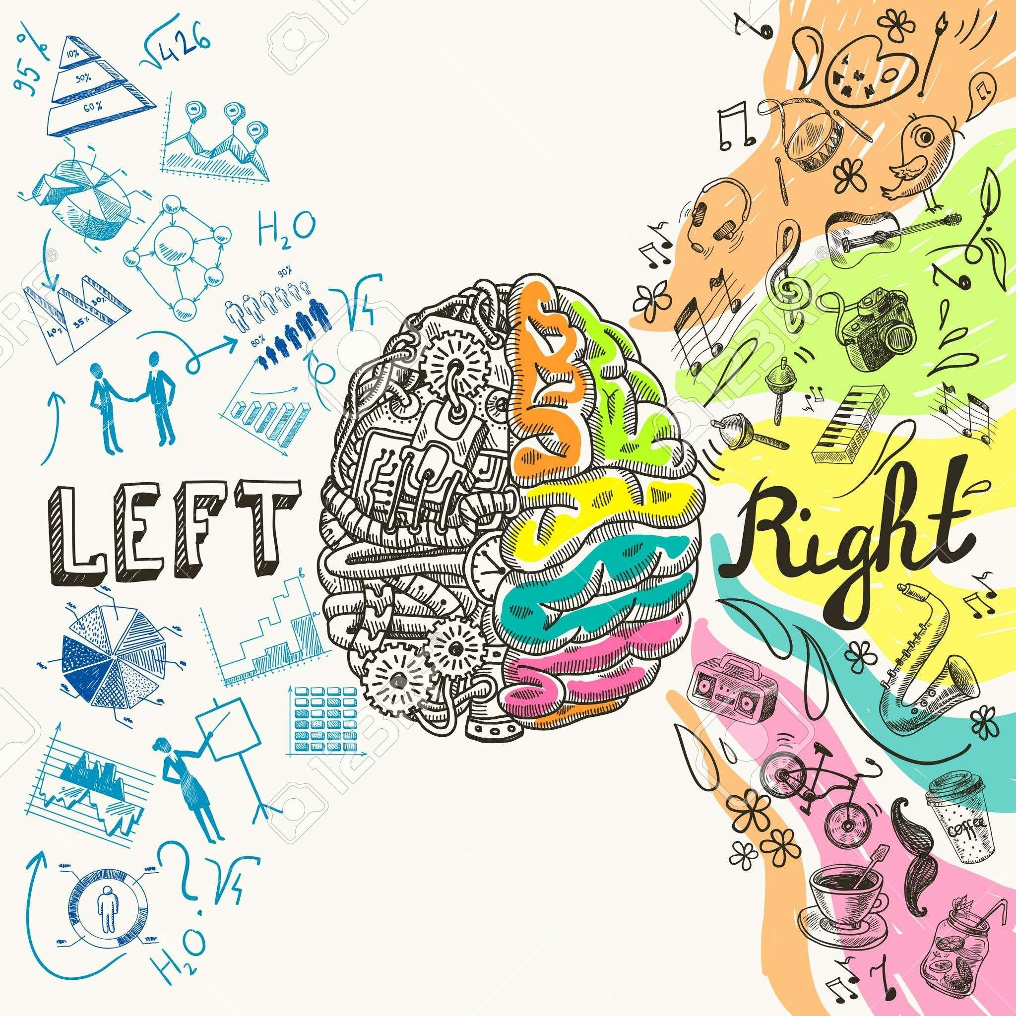 El Cerebro Izquierdo Hemisferios Creativos Analíticos Y Derecha ...