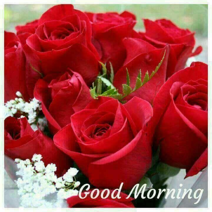 Good Morning Good Morning Roses Good Morning Flowers Morning Rose