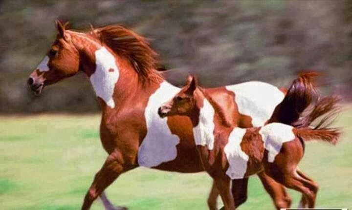 Horse Gifts for Men Unique Horses Dads Pets Owners Animals Lovers for Him