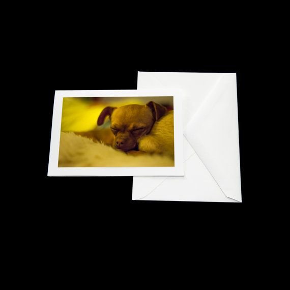 Chihuahua blank greeting cards photo greeting cards paper handmade chihuahua blank greeting cards photo greeting cards paper handmade greeting cards thank you cards dog card sound asleep happy safe m4hsunfo