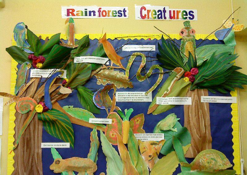 Rainforest Creatures classroom display photo Photo