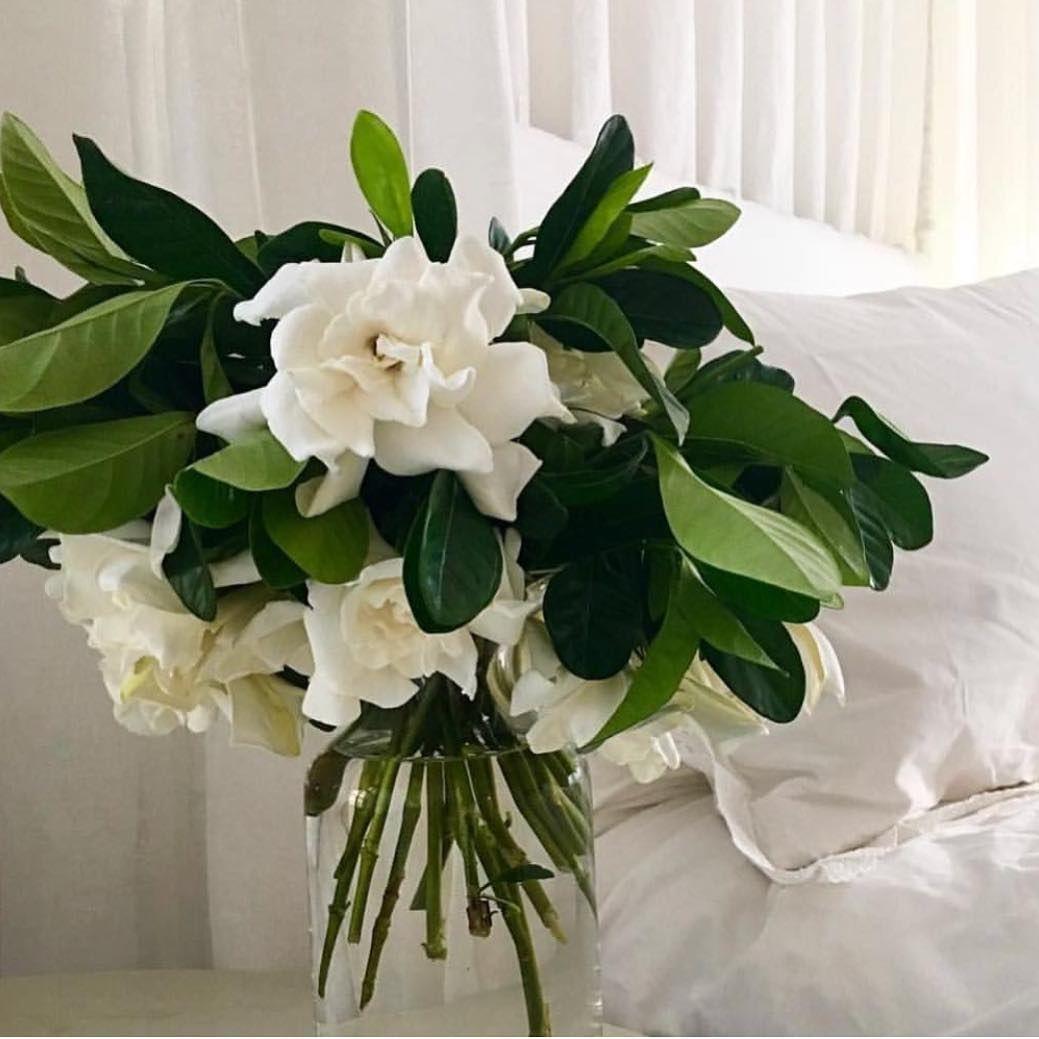 Summer Breeze Freshcut Gardenias Overnight Fragrance Whiteflowers Whitelinen Summer Instaflower In 2020 Fresh Flowers Arrangements Flower Display White Flowers