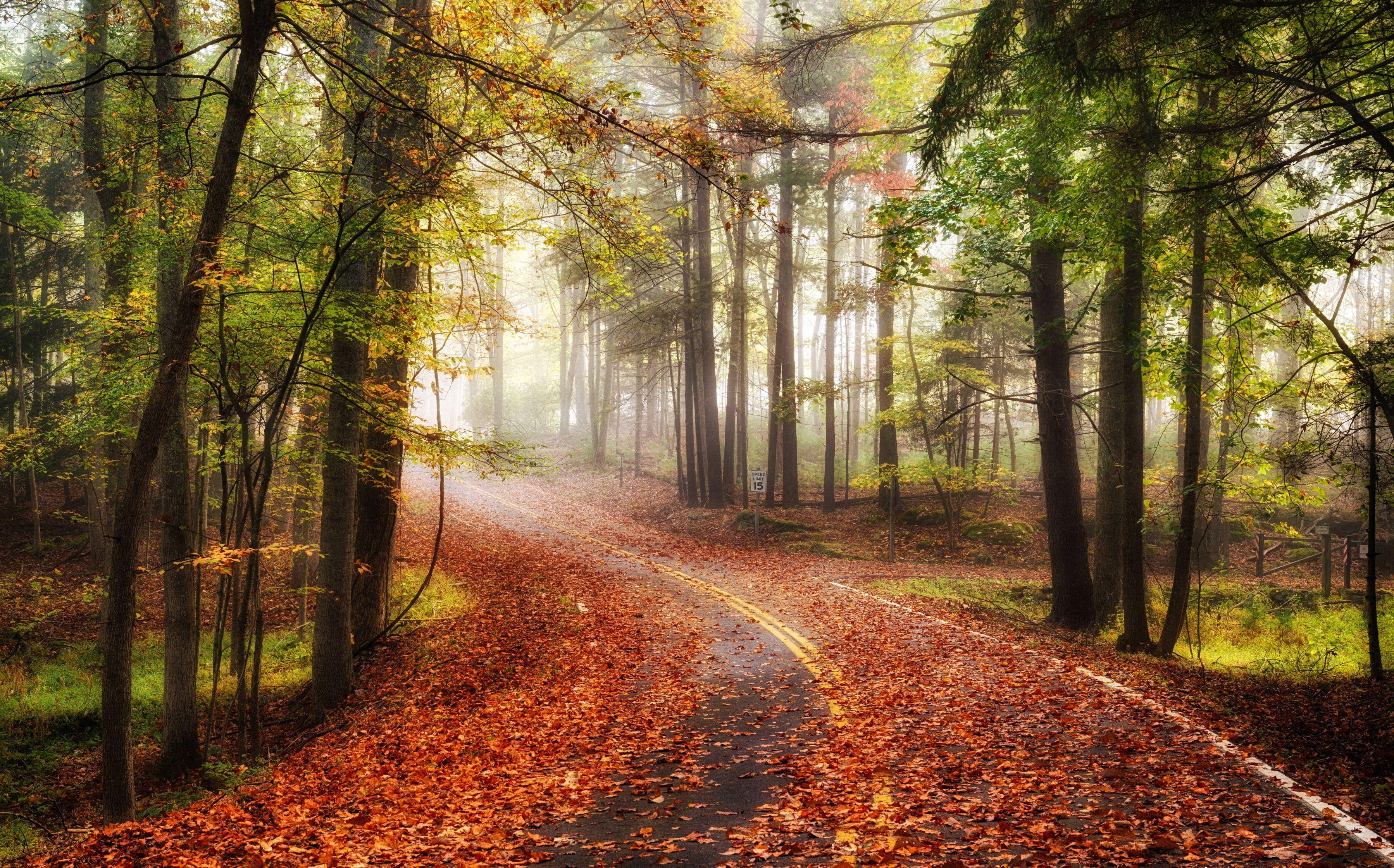Http Elitefon Ru Nature 38722 Doroga Pejzazh Osen Doroga Les Listya 4k Html Priroda Les Osen Autumn fog trees forest alley road