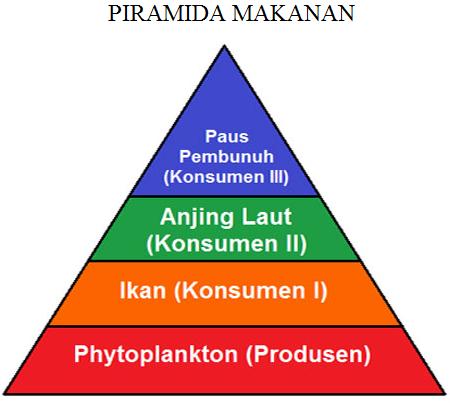Pengertian Dan Jenis Piramida Makanan Beserta Contohnya Terlengkap Http Www Gurupendidikan Com Pengertian Dan Jenis Pi Jenis Makanan Belajar Bahasa Inggris