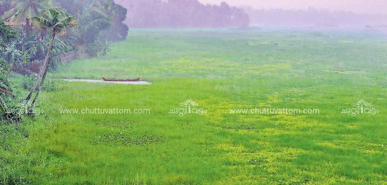 പച്ചപ്പട്ടു വിരിച്ച് Natural landmarks, Landmarks, Ernakulam