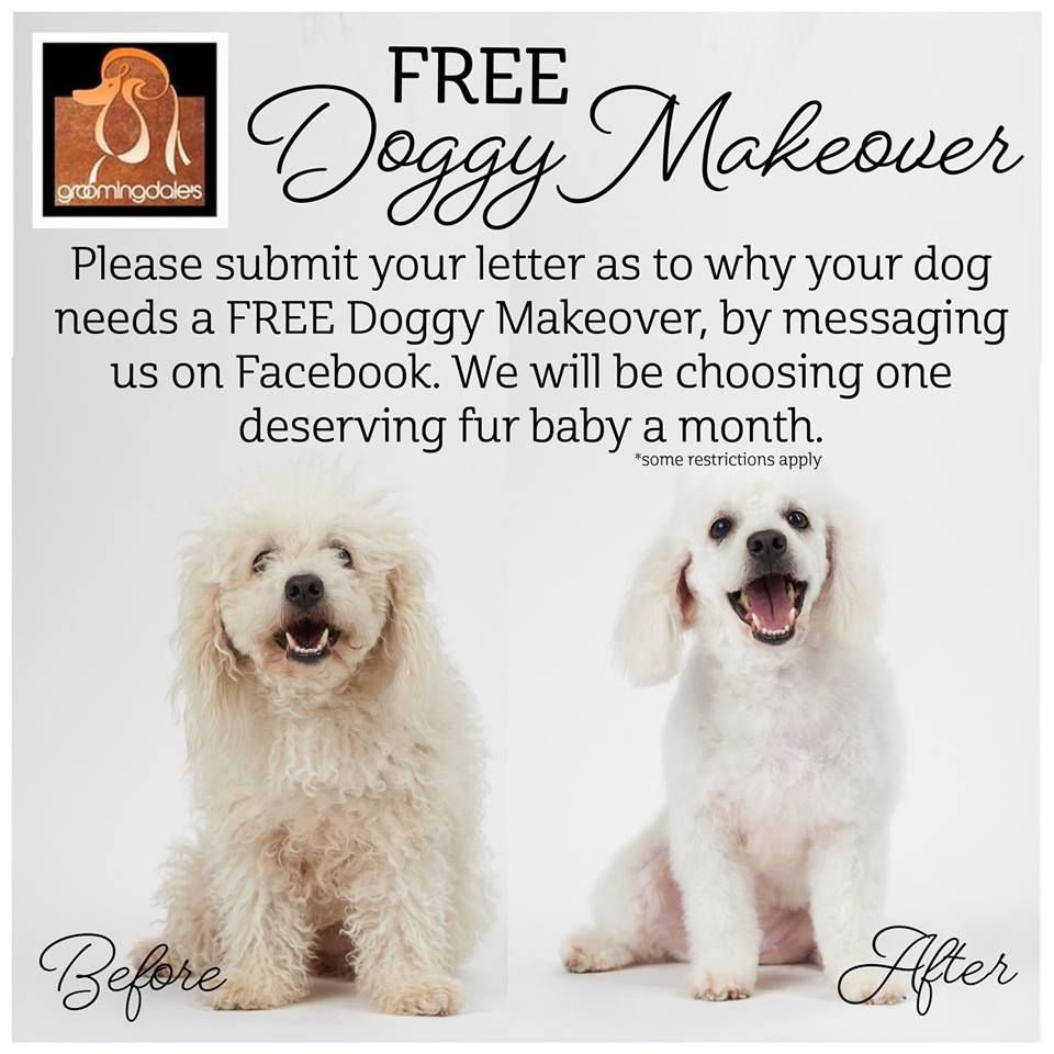 We Are Starting A Free Doggy Makeover If Your Dog Or You Know Of A Dog That Needs A Makeover Or Just Some Good Grooming Submit A Pet Grooming Grooming Doggy