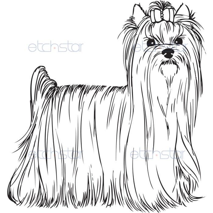 Akc Yorkshire Terrier Standing Pinturas Desenhos Seja Como Flor