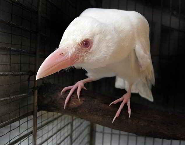 Unusual 22 Albino Animal #albinoanimals