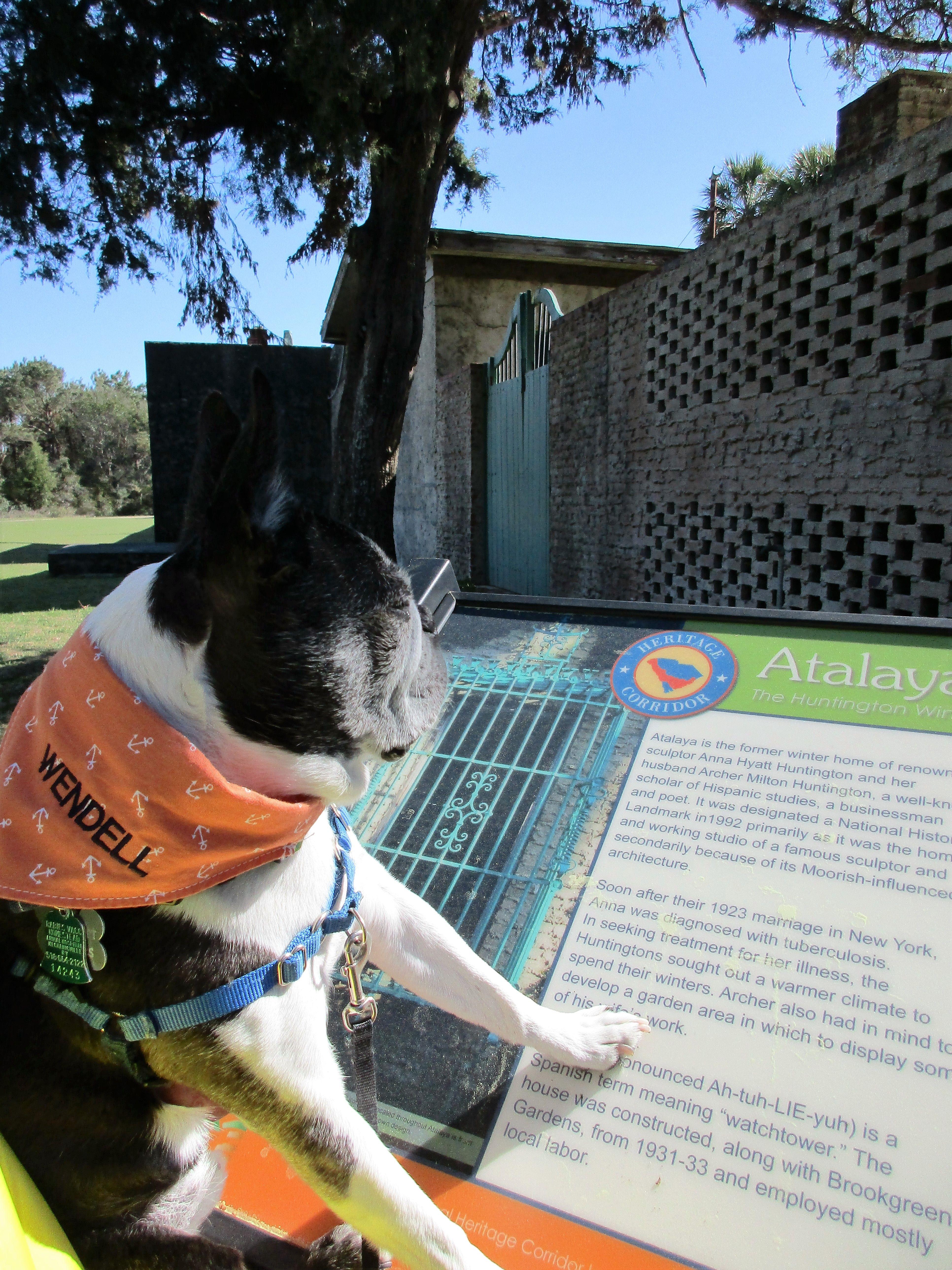 Huntington State Park Sc Boston Terrier Terrier